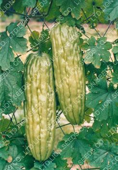 Bitter Gourd-CR152