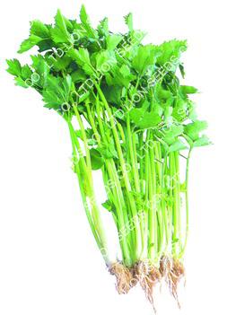 White Celery