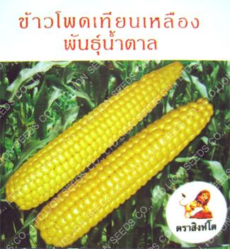 Yellow Waxy Corn