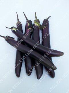 Eggplant - EG 4681