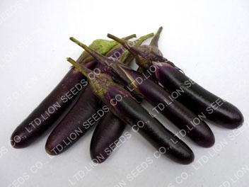 Eggplant - EG 4683
