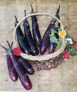 Eggplant - Manee 093