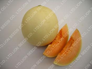 Melon – Honey734