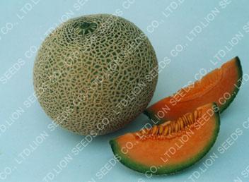 Melon – M4501