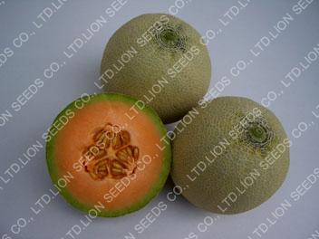Melon4506