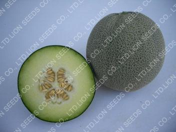 Melon – M737