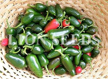chili-pepper-PE H10