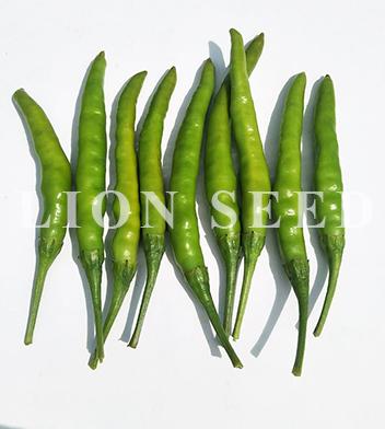 chili-pepper-PE H11