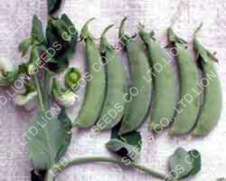 peas-no-1