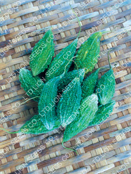 Thai Bitter Cucumber