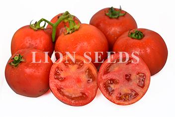 Tomato | LION SEEDS CO , LTD