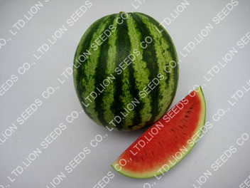 Watermelon - WM ex1716