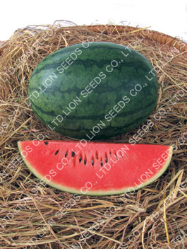 "Watermelon "" Ruam Dao"