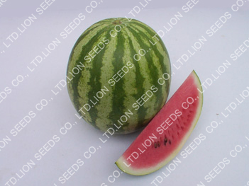 Watermelon - 145 Wanchai