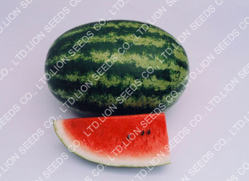 Watermelon - WM 148