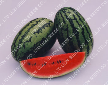 Watermelon - WM 155 Dala