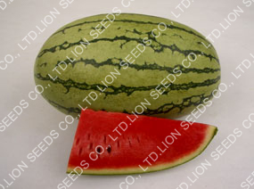 Watermelon - WM 156