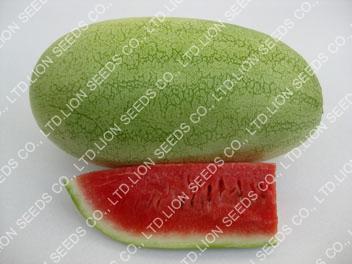 Watermelon Makro316