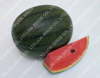 Watermelon - WM 4113 Karat