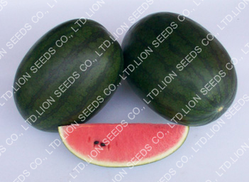 Watermelon - WM 4120 Swaat