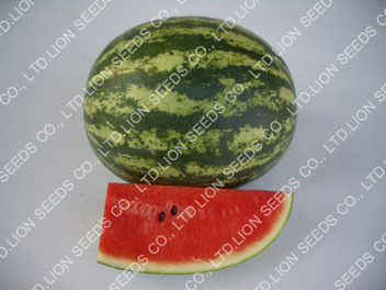 Watermelon - WM 4126