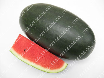 Watermelon - WM 4132