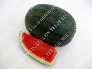Watermelon - WM 4139