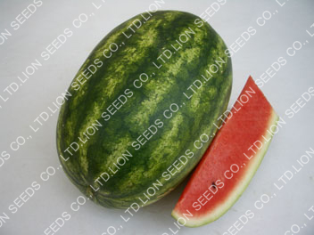 Watermelon - WM4140