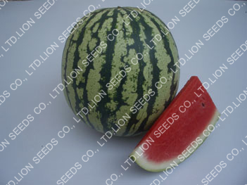 Watermelon - WM4150