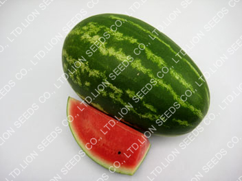 Watermelon - WM4151