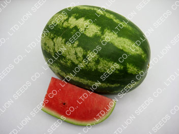 Watermelon - WM 4152