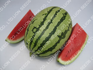 Watermelon - WM4153