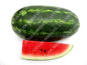 Watermelon - WM 4154