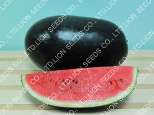 Watermelon - WM 4156