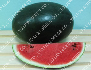 Watermelon - WM 4158
