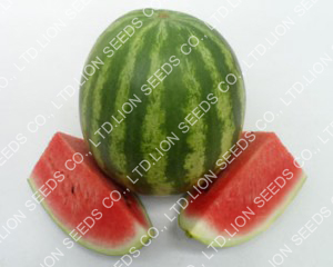 Watermelon - WM 4159