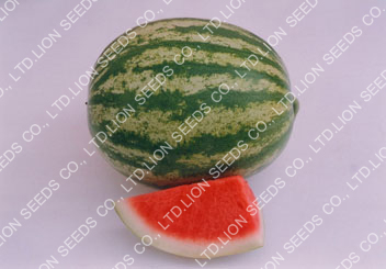 Watermelon - WM 53